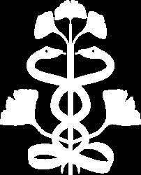 Zentrum für ganzheitliche Gesundheit